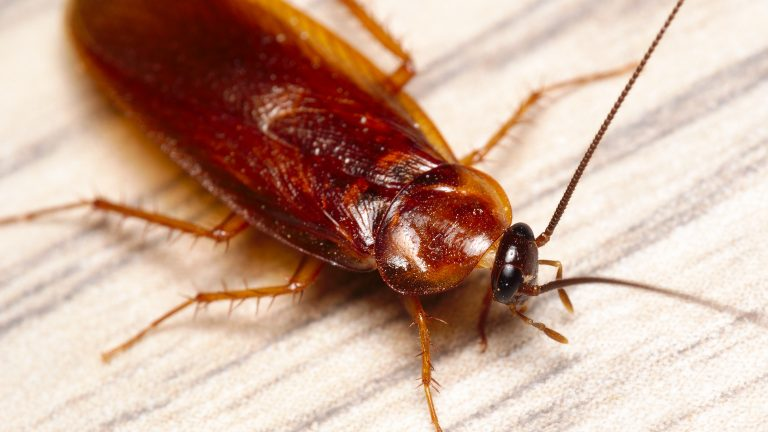 Cockroaches:  Get Rid of Them!